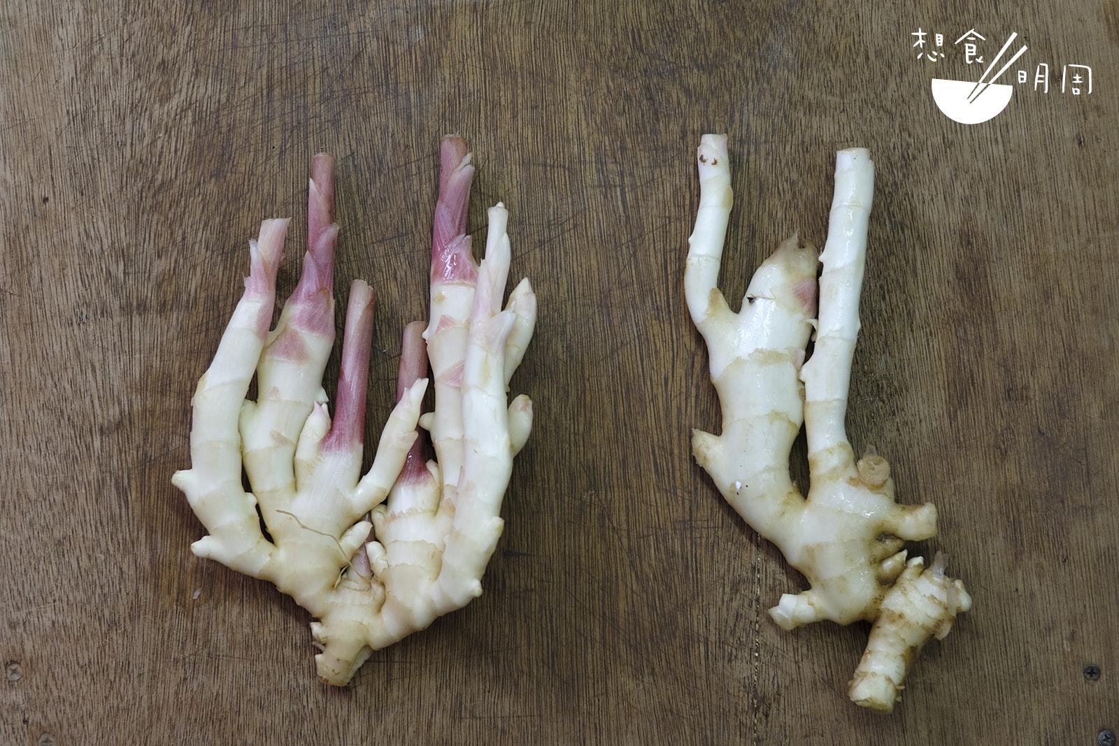 一塊子薑的好壞,看它的身型就知道;薑芽多而粗壯 為上品(左),瘦削沒薑芽的就不要選了(右)!