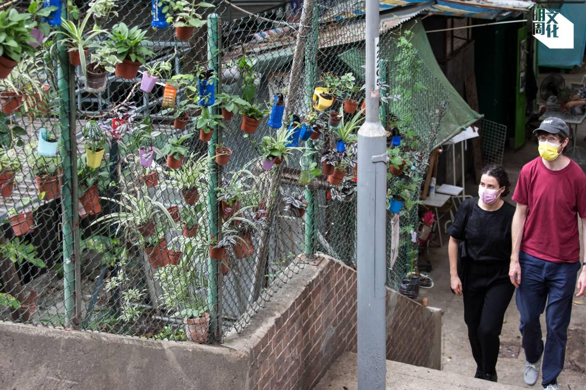「張蘇記」店主張明自小喜歡種植,樓梯上的植物大部分是分枝而來,一棵分成好幾棵。