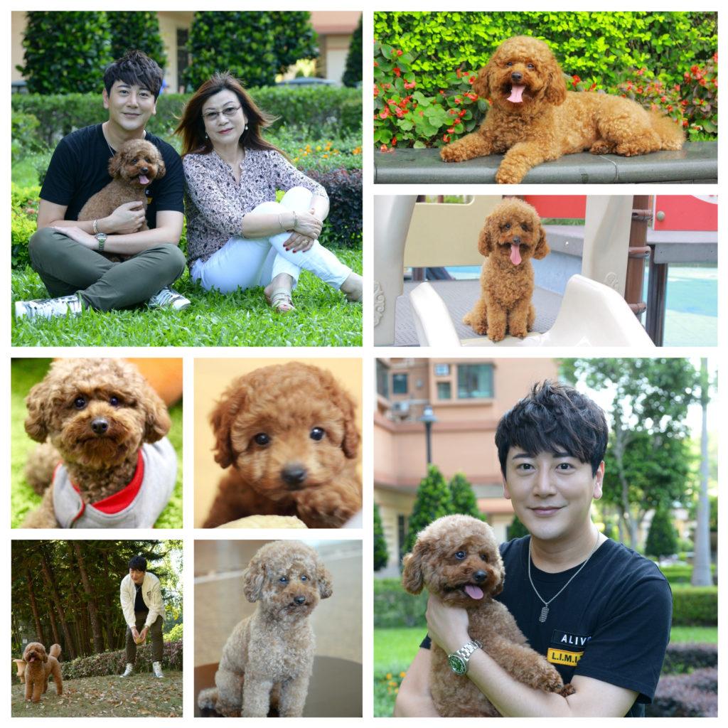 小狗Jimmy是傅晉杰和媽媽的最愛
