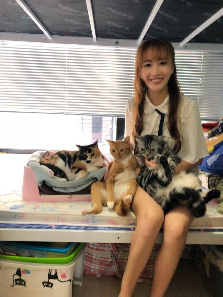 (左起)Momo、Moco和Coco都是安采妮收養回來。