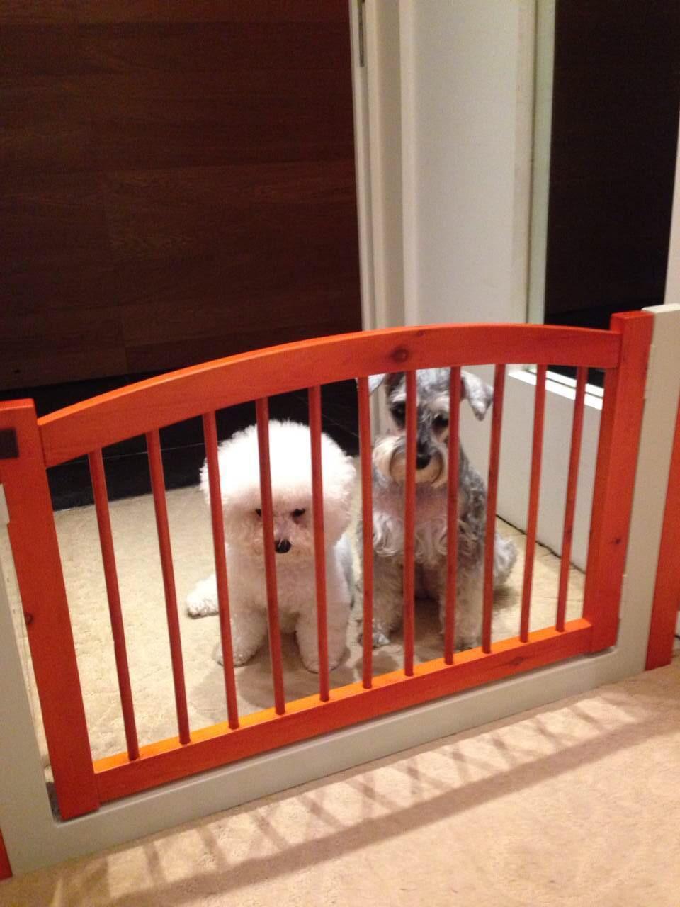 屋企一定要裝置圍欄,不可讓牠們到一些有危險性地方。