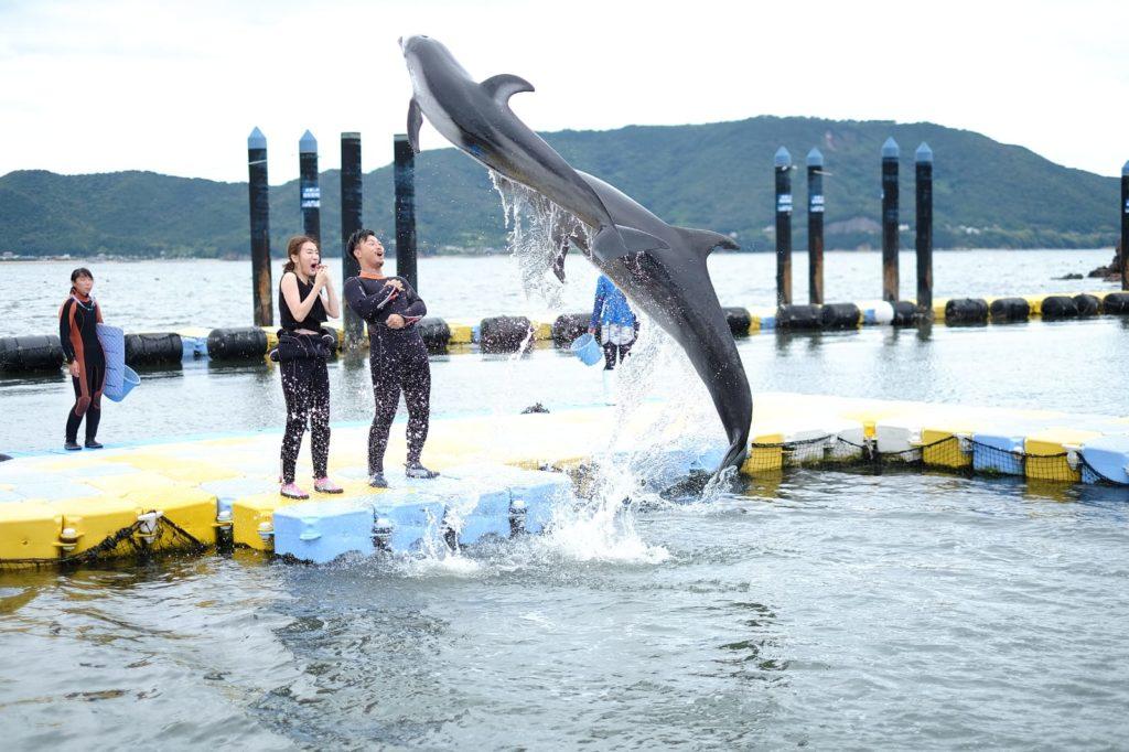 第一次近距離接觸海豚,家旻大呼緊張刺激,海豚的身體又滑又厚,十分可愛。