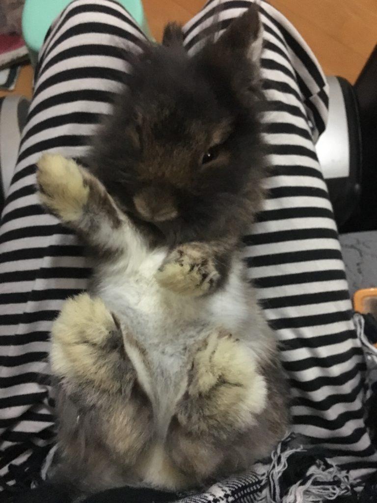 Yoyo平日花很多時間陪伴兔妹,牠最愛主人輕掃身上的毛。