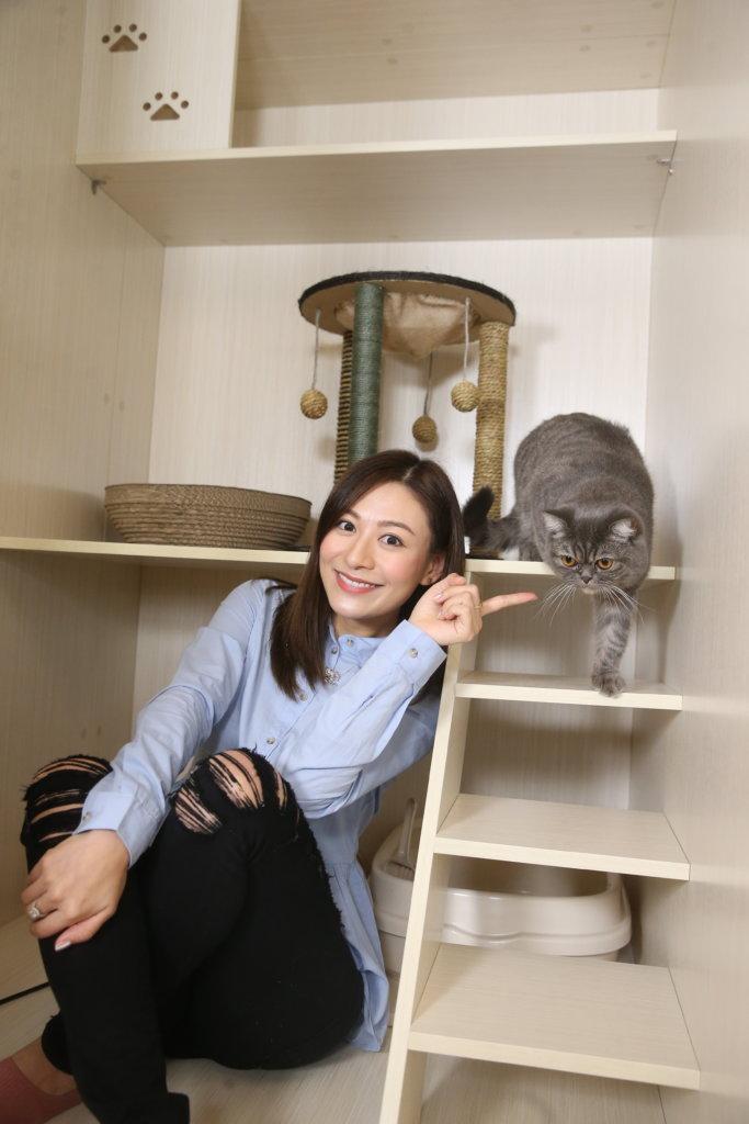 經常出埠的江若琳,與三位朋友合資開設貓酒店,希望貓貓有舒適環境暫住。
