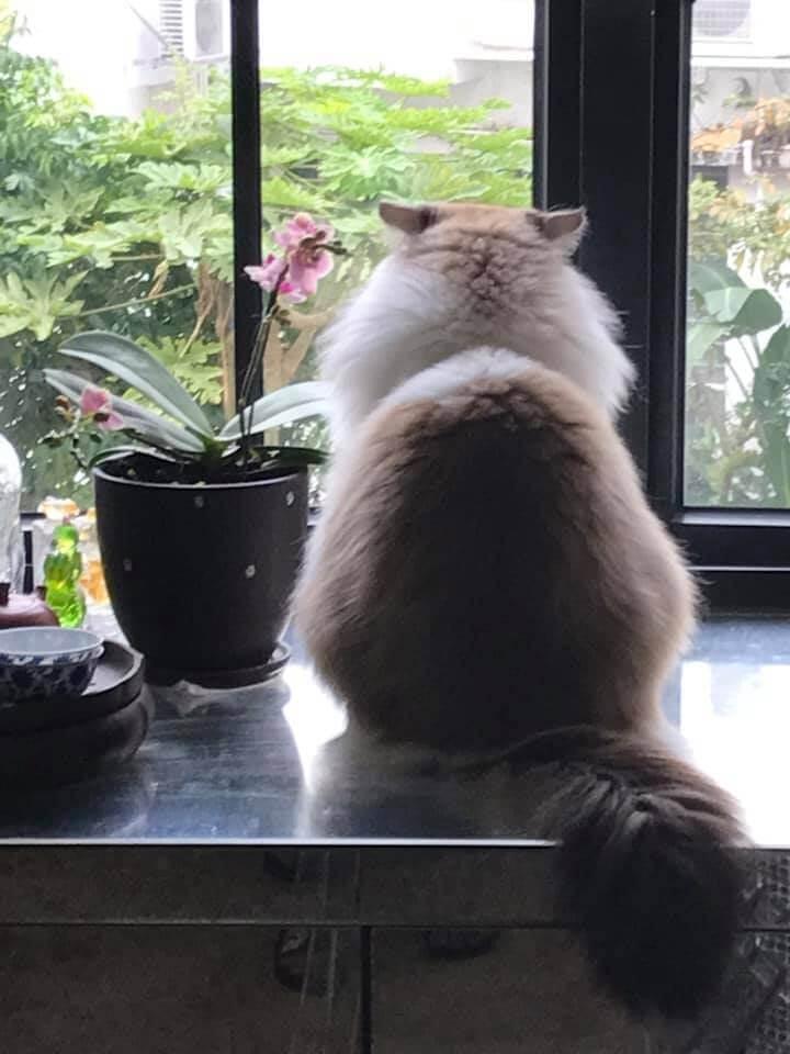 有一棵蘭花,凋謝後再種,竟然長出兩棵來,令她覺得無論發生任何事,都要像棵植物般,堅強地活下去。