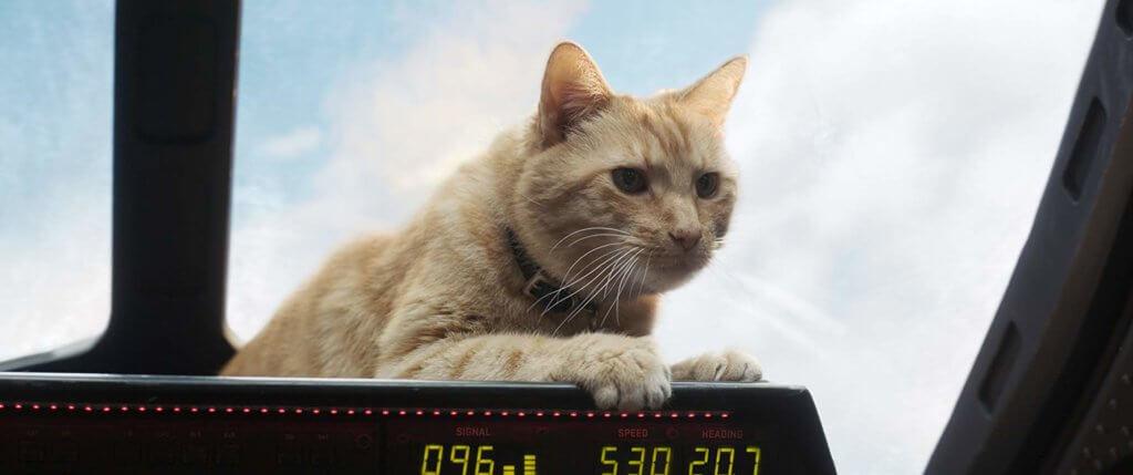 重要角色黃色貓貓Goose,成功俘虜貓奴觀眾。