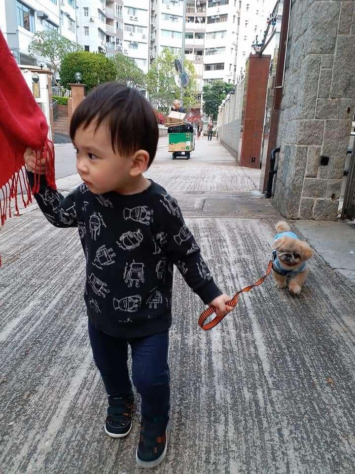 父母本身都喜歡小動物,Alfie自小已懂得跟小狗相處,關係儼如朋友般。