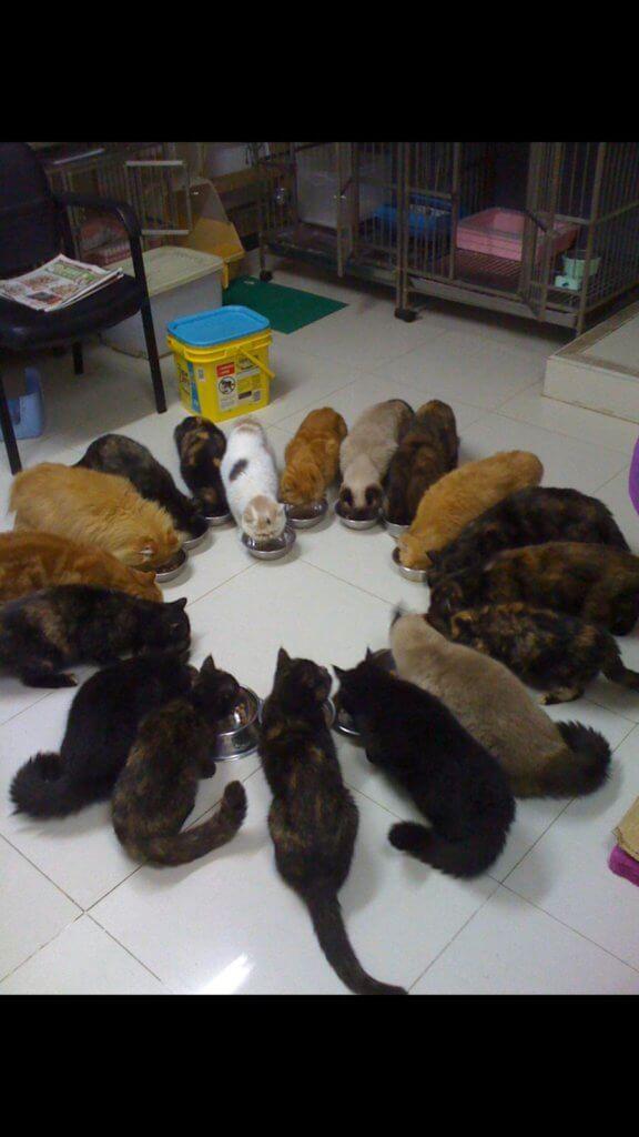 最高峰時期,曾慧雲家中養了二十隻貓,場面非常壯觀,由於她從不在家中開火煮食,廚房亦被她改裝為貓房。