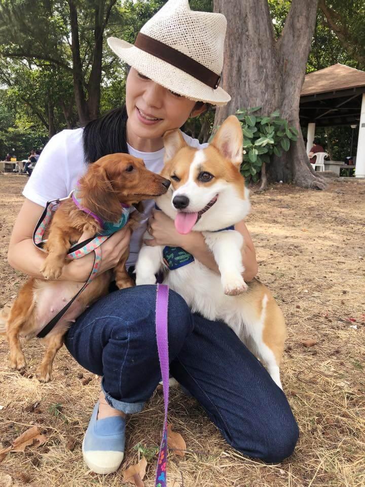 楊采妮很喜歡狗,家裏養了兩隻小短腿,分別是哥基和臘腸狗。