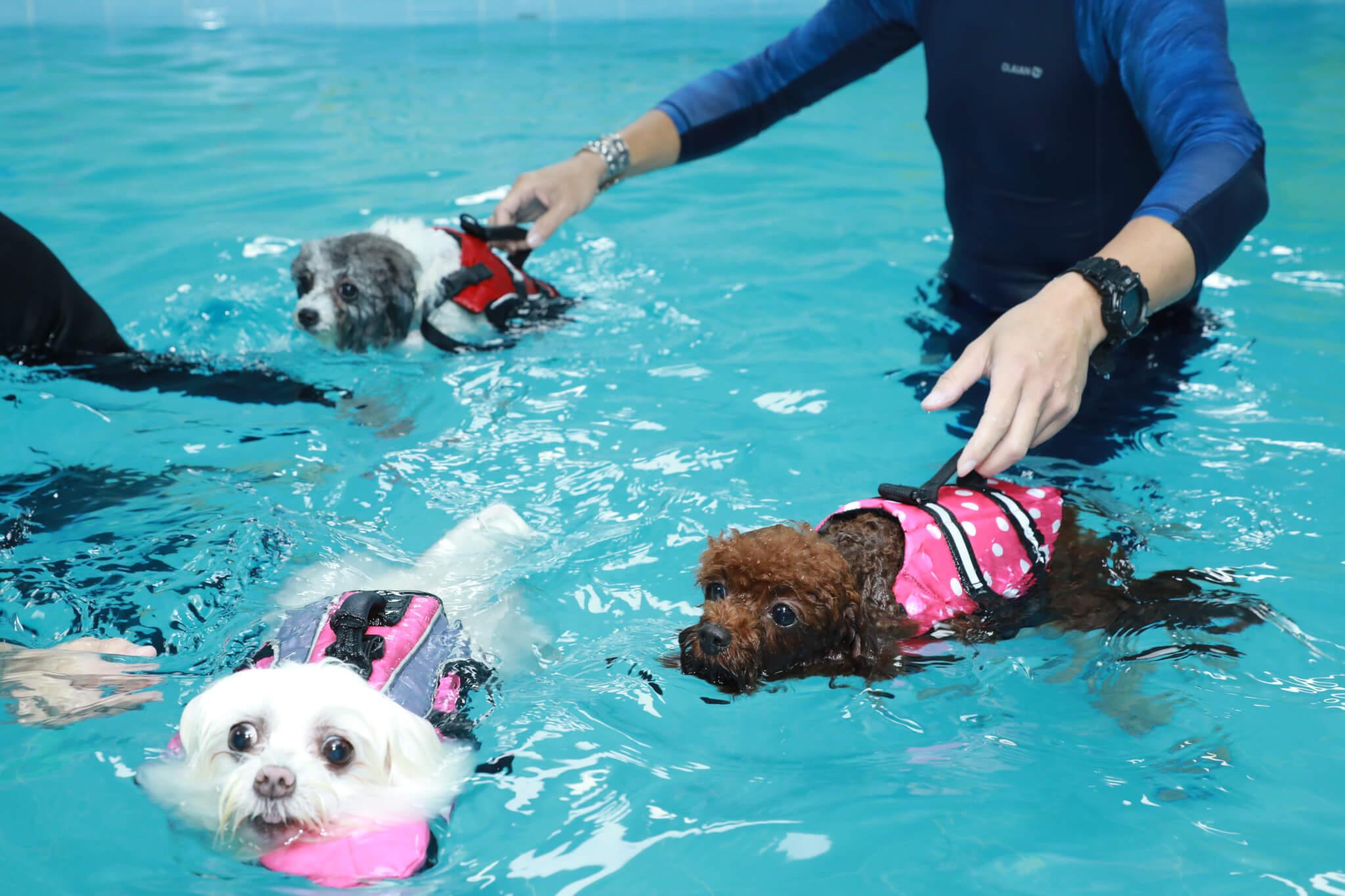 三隻原本毛茸茸的狗,變成濕水落湯雞,十分好笑。
