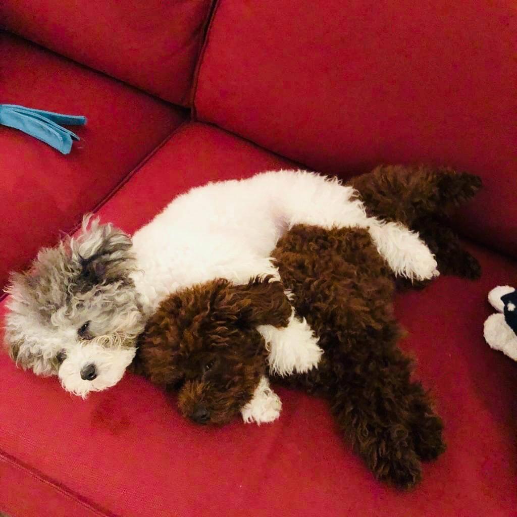 Ben表示每次看牠們睡覺的模樣就覺得很幸福。