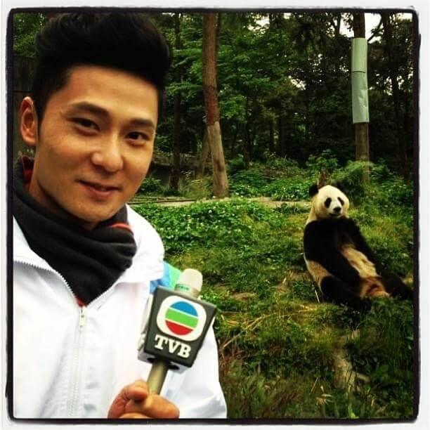 在四川地震災區採訪時,他去了視察熊貓有否受驚。