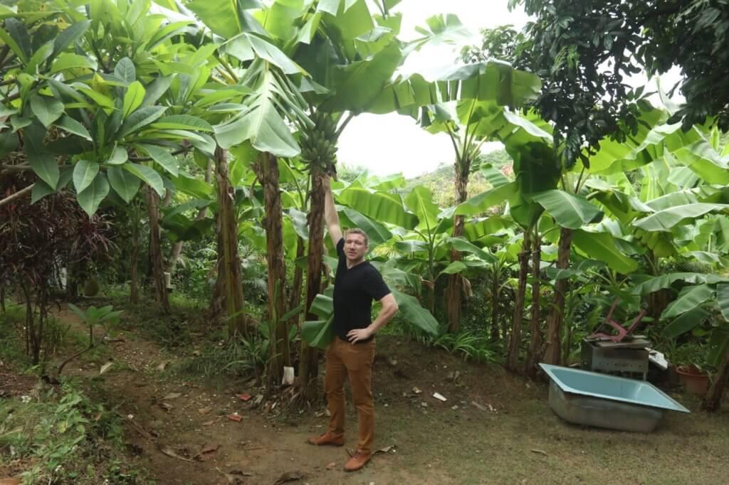 屋後面有一個小花園及小樹林,種了很多蕉樹。