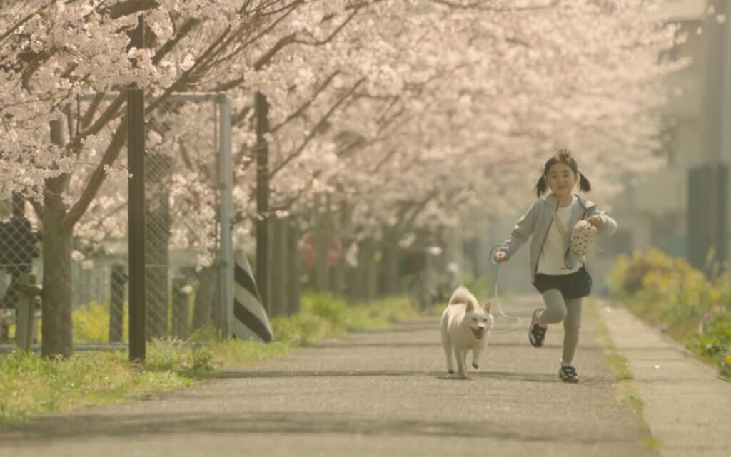 《奇蹟車站》描寫新海誠愛女新津知世飾演的小女孩,緬懷病逝的愛犬露露,並如何釋懷。