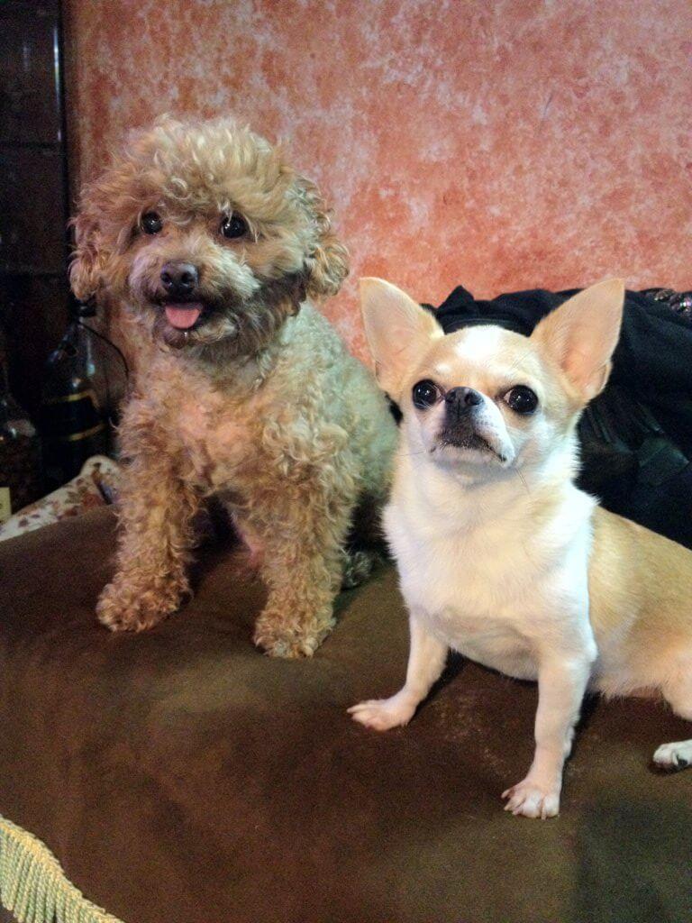 阿仔與Qubie是Vikki以前收養的,雖然已離開,但每次會盡能力讓牠們幸福。