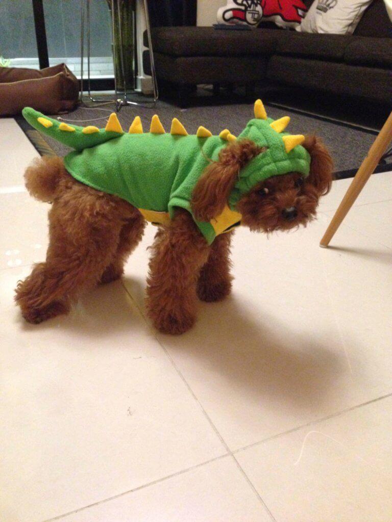 Bilu不喜歡穿任何衣物,有次野人為牠穿上一件恐龍衣服,牠就表現得一臉厭世。