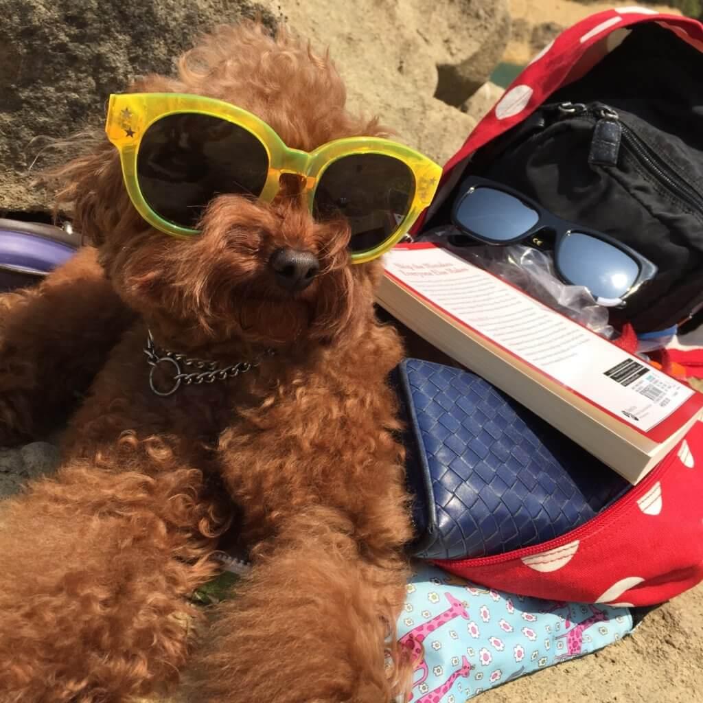 野人不時會帶Bilu去行山,停下來戴上太陽眼鏡的牠,看起來非常招積。