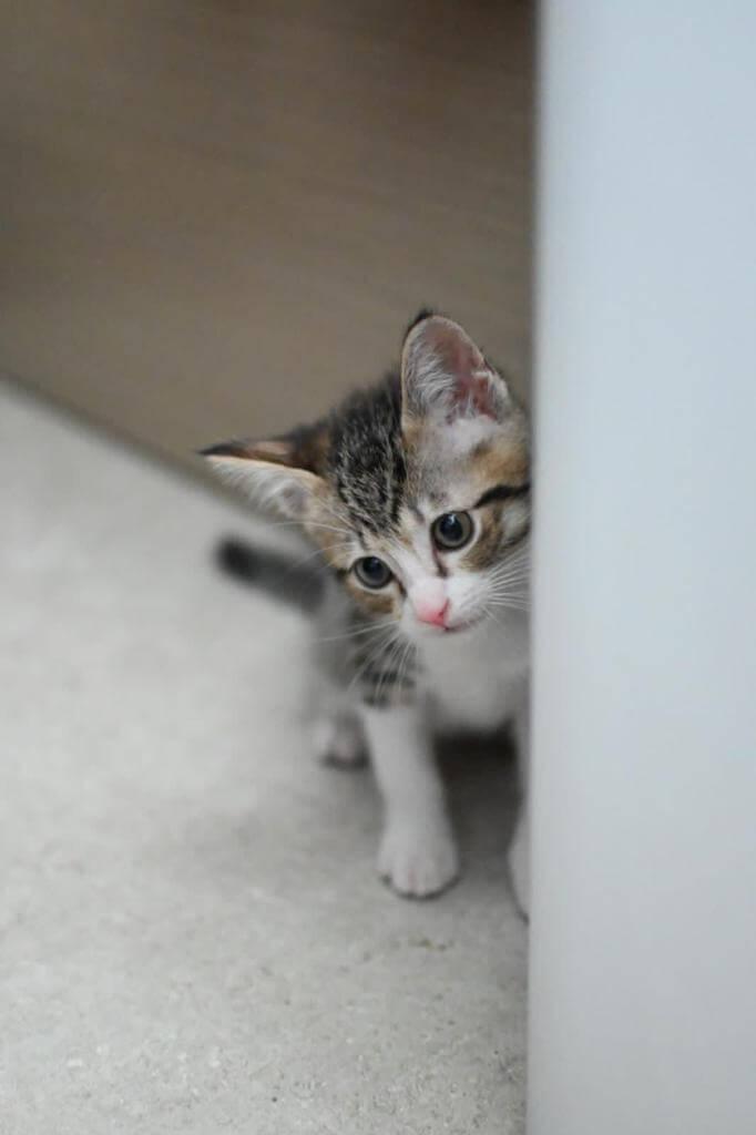 領養的貓BB已兩個月大,好得意。