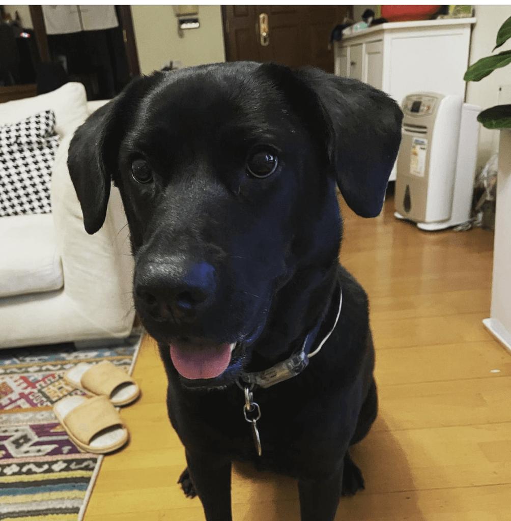 Wyan是鄭俊弘收養的流浪狗,原本暫養,但因為乖巧變成收養。