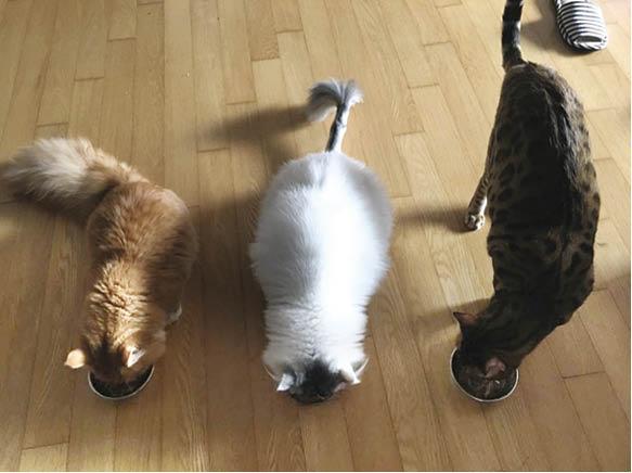 左起:Mong、Kong、Dom