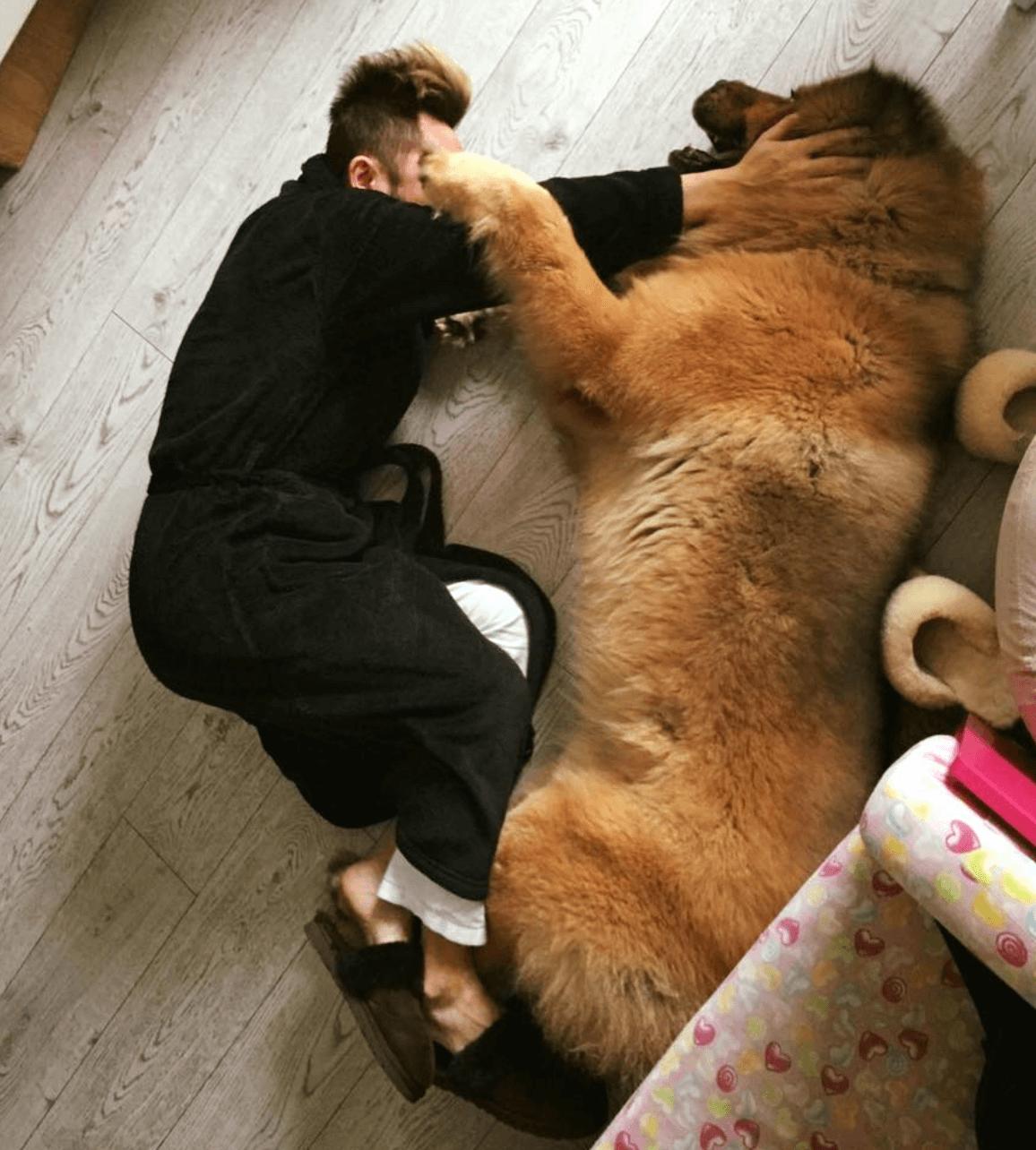 Bear Bear身形比阿細還要大